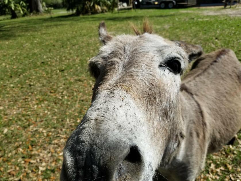 DonkeyCloseup